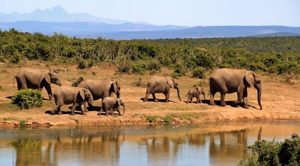 SafariTravelBag2 Elephanta
