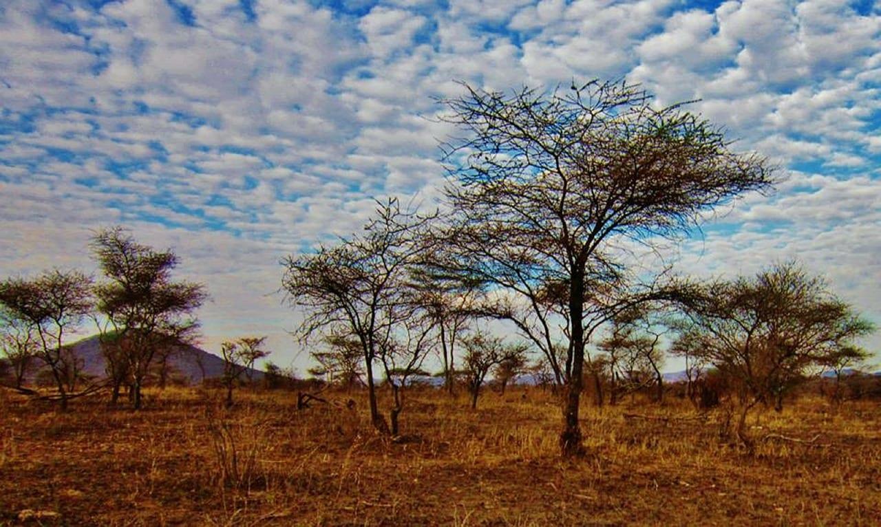 Tanzania Travel Guide 2