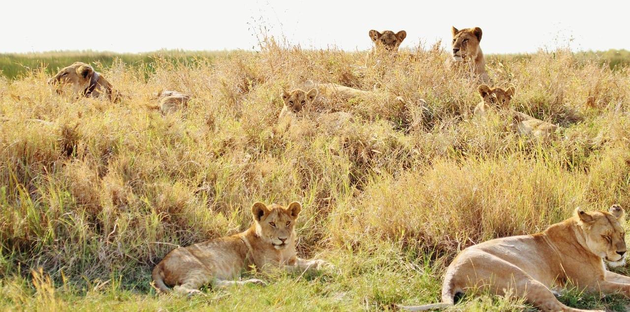 Tanzania Travel Guide 3