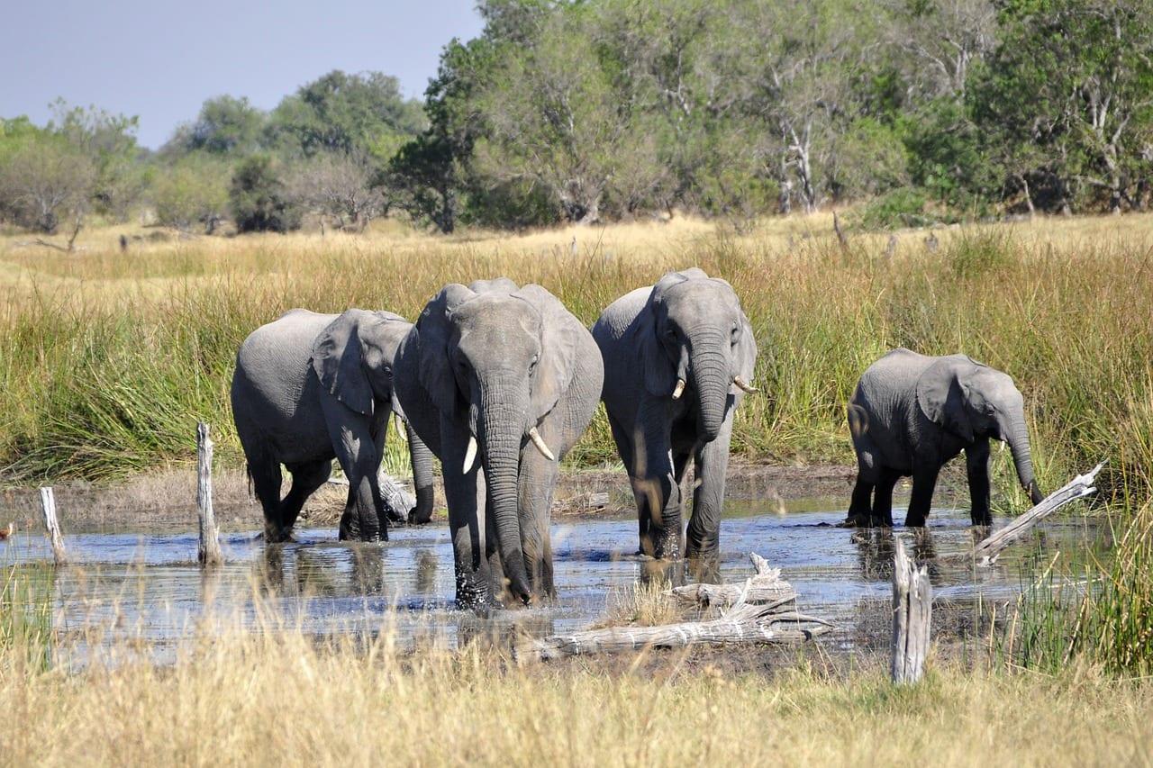 African Bucket List Delta