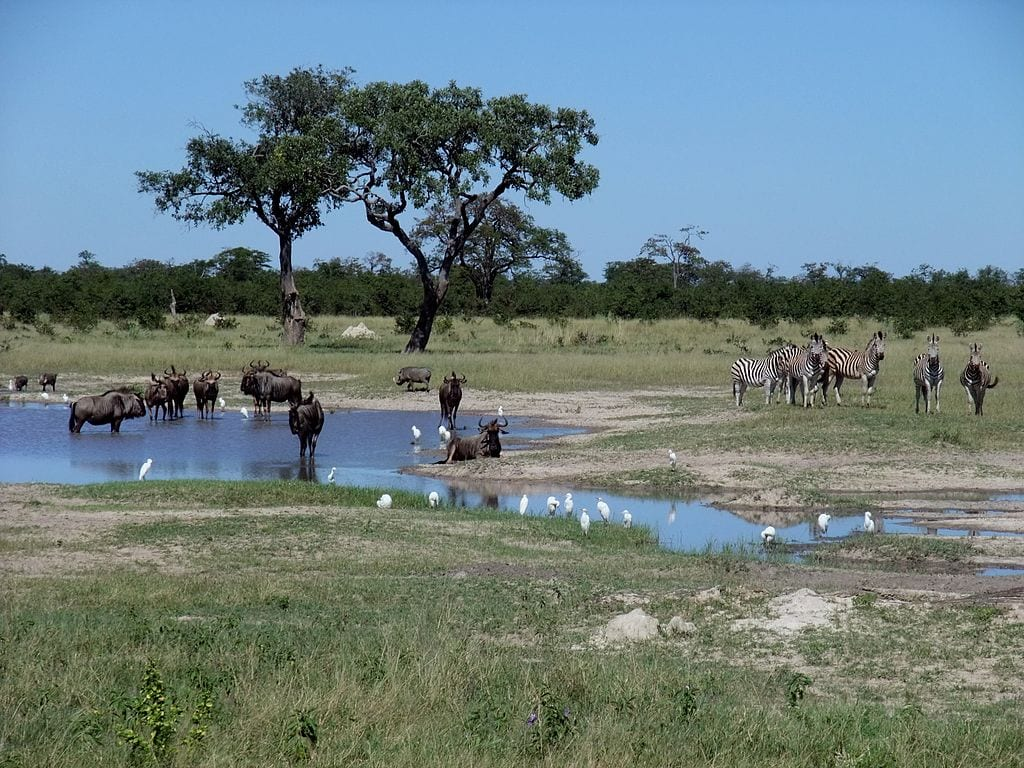 Botswana Travel Guide Image 4