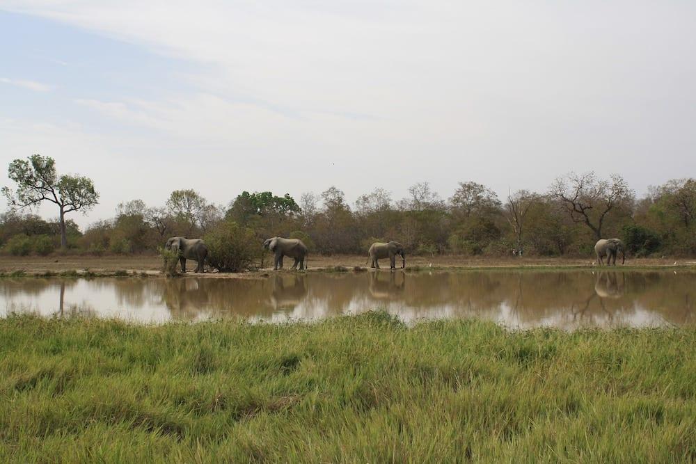 Landmarks in Ghana Mole National Park