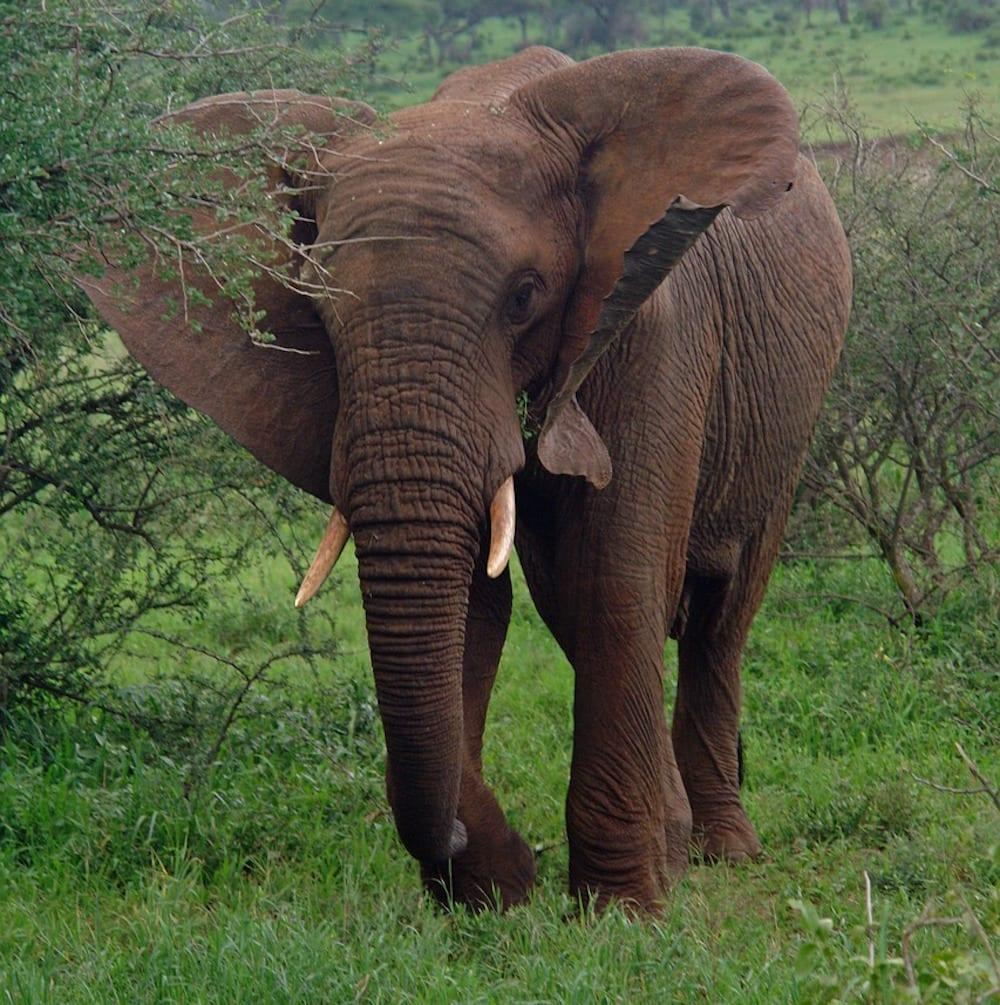 Safari Island africa 1