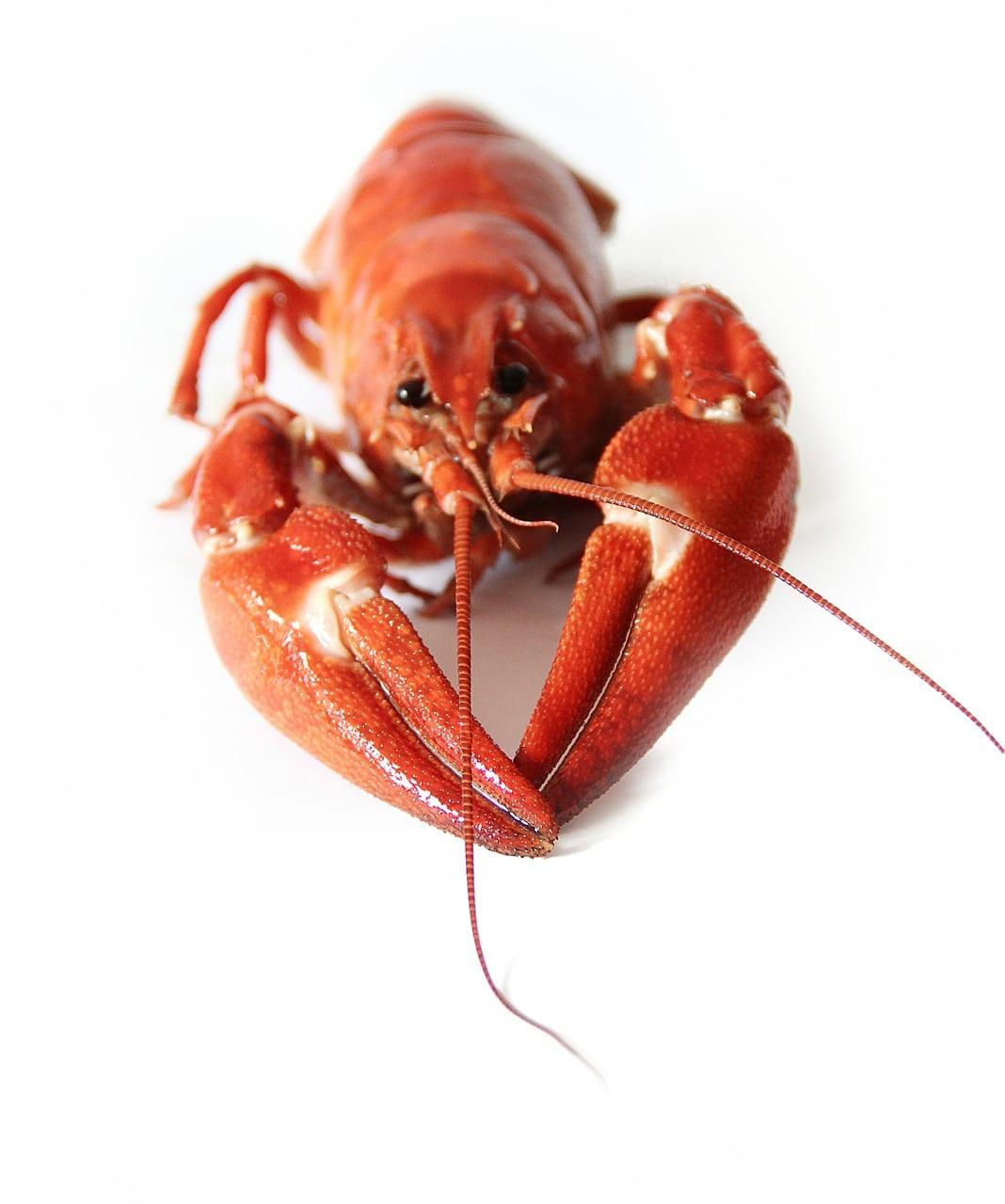 basic ingredients crayfish