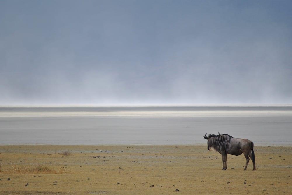 UNESCO wildebeest