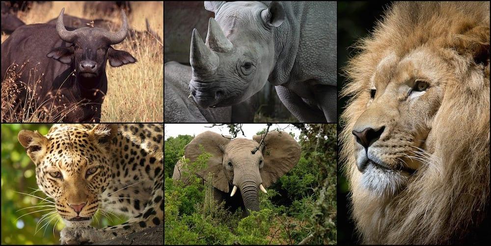 safari collage