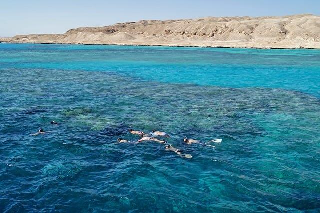 Dangerous Sharks red sea snorkeling