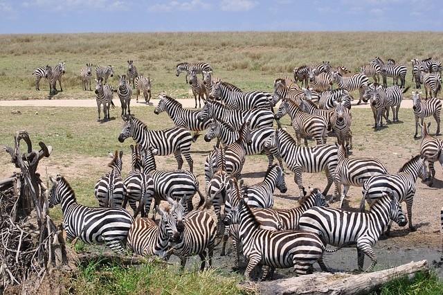 african safari africa 2042829 640