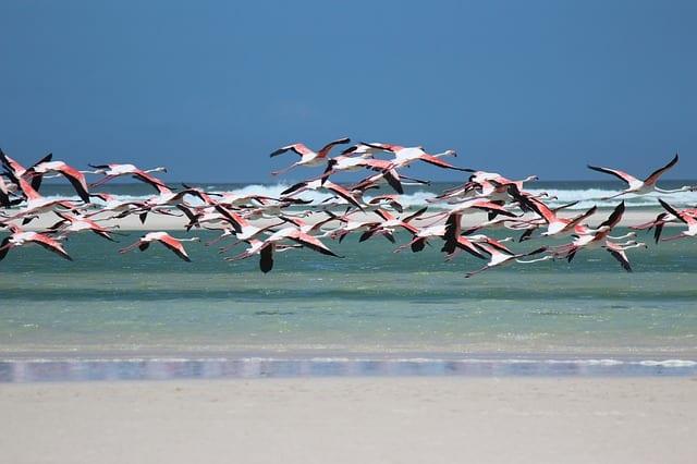 Visit to Africa flamingo