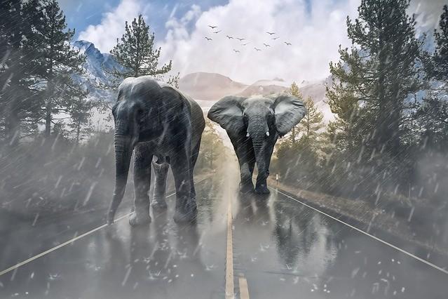 African Myths elephant