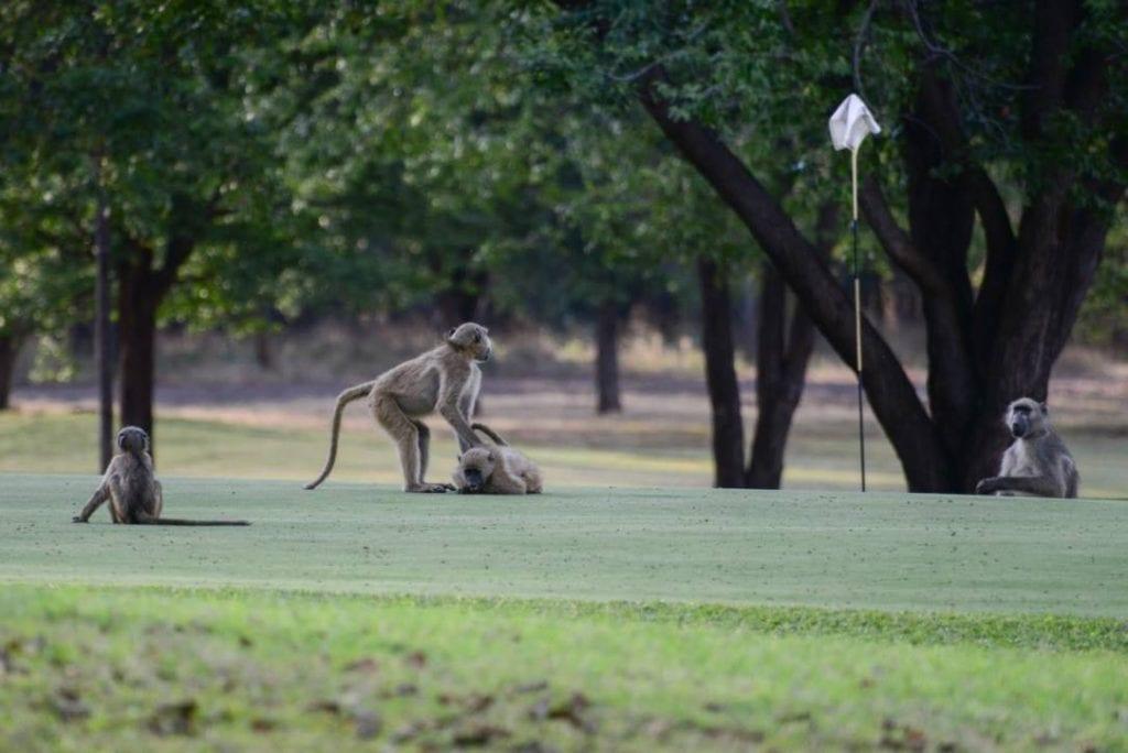 Best Golf Courses elephant hills resort 1024x684