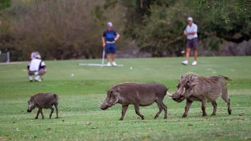 Best Golf Courses skukuza 800x450