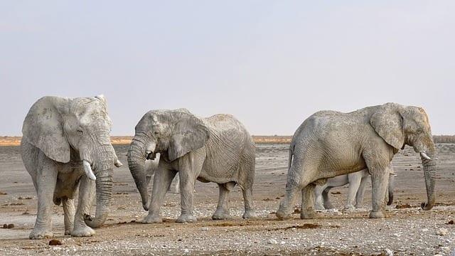 Namibia Travel Guide elephant