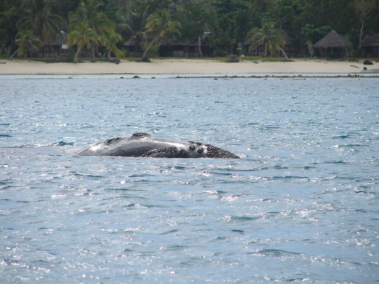 Whale Madagascar Travel Guide