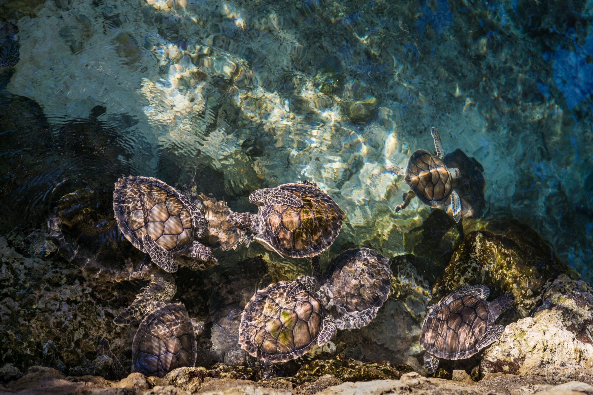 Scuba Diving in Africa ricardo braham