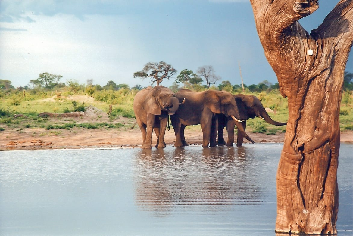 Zimbabwe Travel Guide Down the water hole