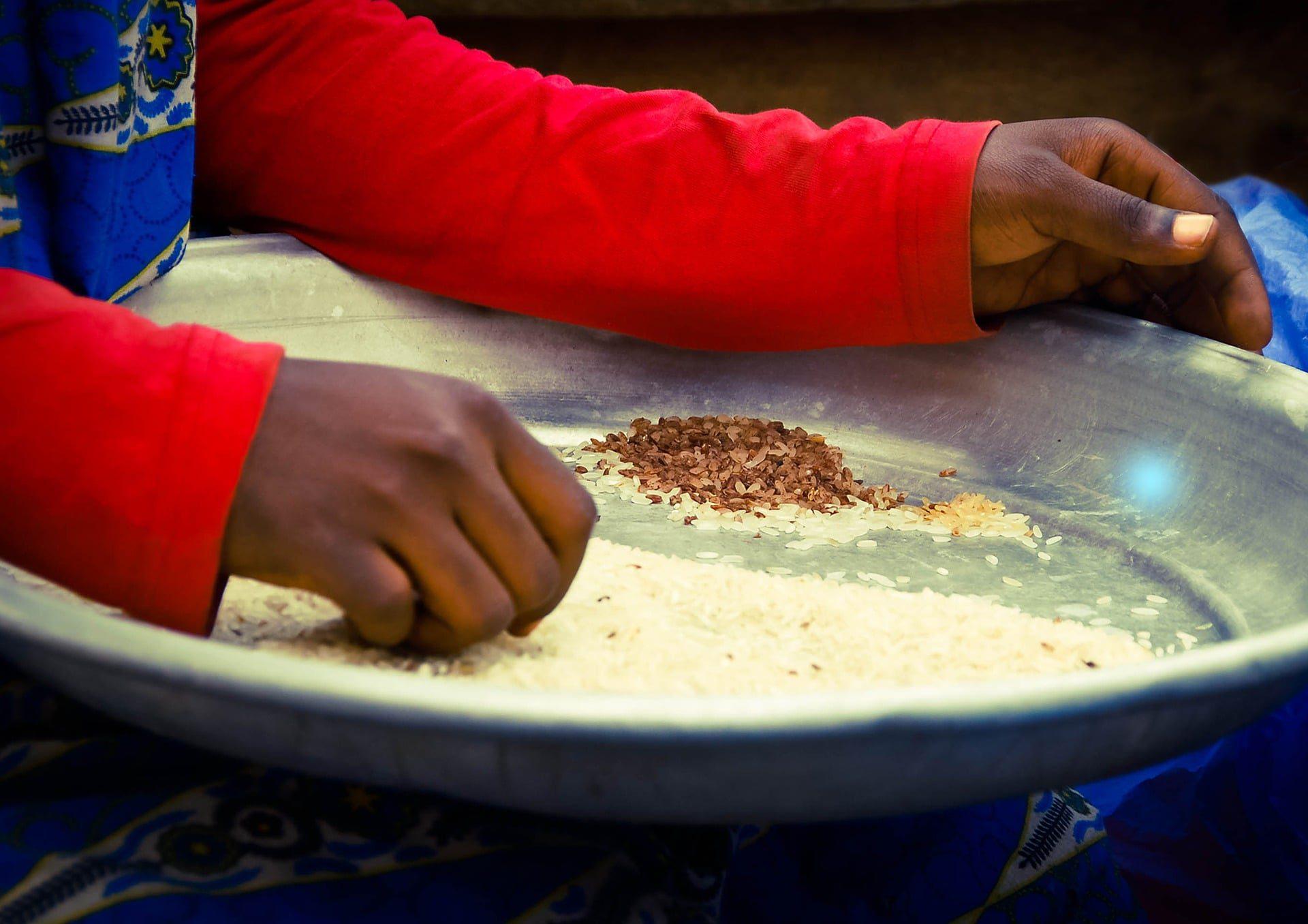 ghana woman rice